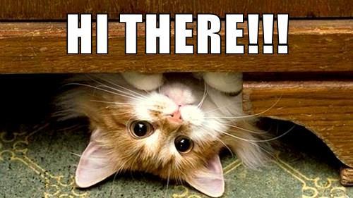 Image result for cat hi